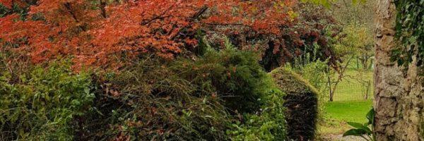 zonas comunes de Andariveles, salida al jardín